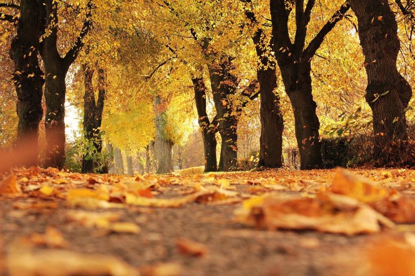 trees-1789120_1920
